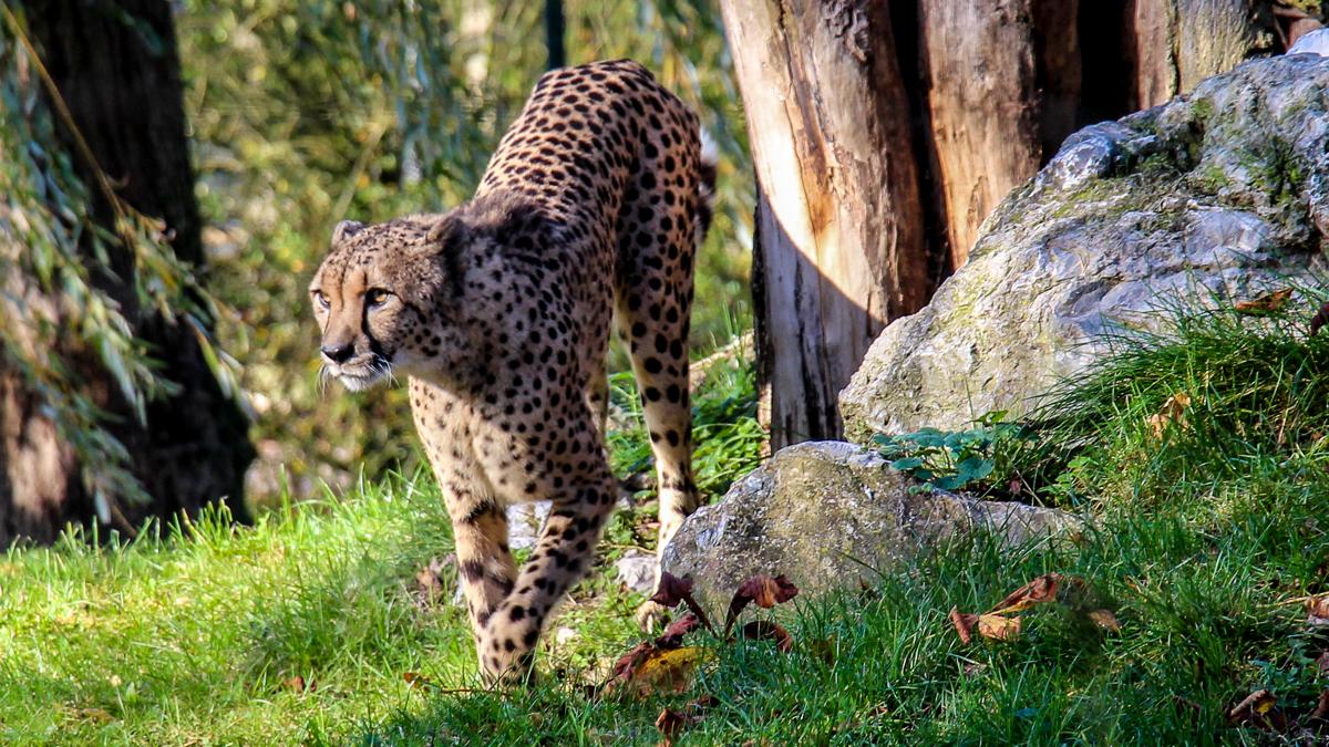 gepard-mercedes-amg-gt-gts-2015-2