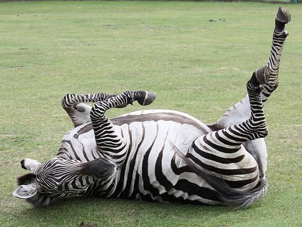 zebrastreifen-jens-stratmann